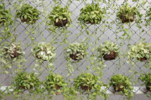 Как задекорировать забор из сетки рабицы? Украшаем забор из сетки рабица - 8 вариантов